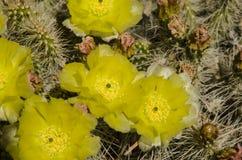 Кактус от верхней части и желтого цвета Стоковые Изображения RF