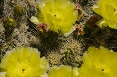 Кактус от верхней части и желтого цвета Стоковая Фотография RF