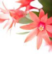 кактус пасха Стоковое фото RF