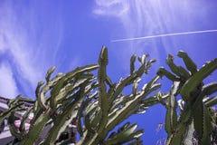 Кактус под темно-синим небом в Сан-Диего, США стоковые фото