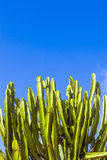 Кактус под голубым небом Стоковое Изображение