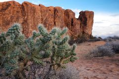 Кактус пустыни стоковые фото