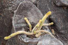 Кактус растя в стволе дерева стоковая фотография