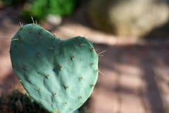 Кактус сердца симпатично Зеленый цвет и красивое стоковое фото