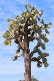 кактус цветеня Стоковые Фото