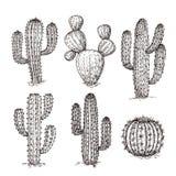 Кактус эскиза Кактусы пустыни руки вычерченные Винтажный гравируя западный мексиканский набор вектора заводов иллюстрация штока