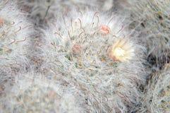 кактус Стоковая Фотография