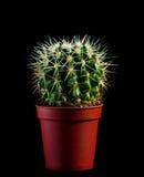 кактус Стоковое Изображение RF