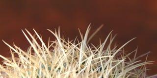 кактус Стоковое Изображение