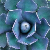 кактус Стоковые Изображения