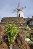 кактус de jardin Стоковое Фото