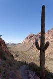 Кактус NM Аризона США трубы органа Saguaro ряда Ajo Стоковая Фотография