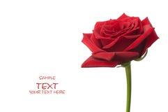 как Валентайн красивейшего красного цвета подарка дня розовое Стоковая Фотография RF