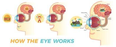Как глаз работает Иллюстрация штока