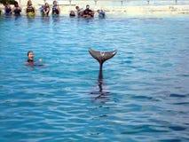 как дельфин cheers с выставок замкните тренера Стоковое Изображение RF