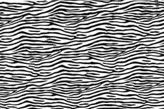 как зебра картины предпосылки Стоковое Изображение