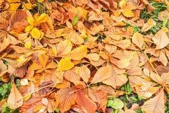 как листья каштана предпосылки флористические хорошие Стоковая Фотография