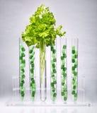 как обрабатывать perforatum микстуры hypericum нажатия эффективный травяной как раз Стоковая Фотография RF
