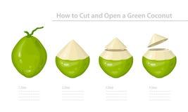 Как отрезать и раскрыть зеленый молодой кокос Постепенная инструкция вектор иллюстрация штока