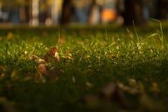 как предпосылка, зеленая трава на лужайке в городе стоковая фотография