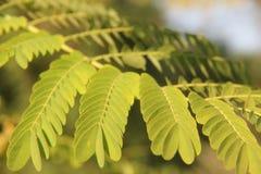 Как раз вырастите нежные листья стоковые фотографии rf