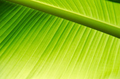 Как раз естественно зеленый цвет Стоковые Изображения