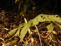 Как раз зеленый лист Стоковое Изображение RF