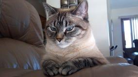 Как раз кот и ее мысли Стоковая Фотография