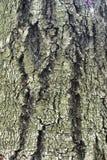 Как раз расшива на дереве Стоковое Изображение