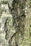 Как раз расшива на дереве Стоковые Изображения RF
