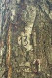 Как раз расшива на дереве Стоковые Изображения