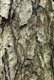 Как раз расшива на дереве Стоковые Фотографии RF