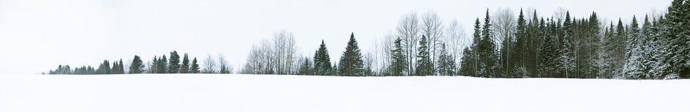 Прямая линия дерева Стоковые Изображения RF