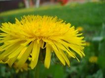 Как раз цветок Стоковая Фотография RF