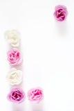 как розы рамки Стоковое Изображение RF
