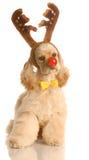 как собака одетьнный rudolph Стоковое Изображение RF