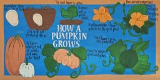Как тыква растет стоковое изображение