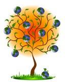 как фруктовое дерев дерево земли Стоковые Фото