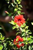 Как цветки пламен Стоковая Фотография RF