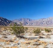калифорнийская пустыня стоковая фотография rf