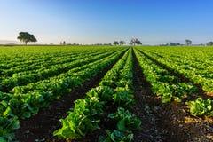 Калифорнийская ферма Стоковые Фото