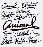 Каллиграфия почерка дикого животного Стоковые Фотографии RF