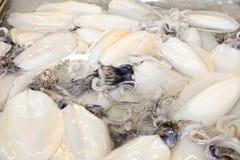 кальмары младенца сырцовые Стоковые Изображения