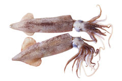 Кальмары Стоковые Фото