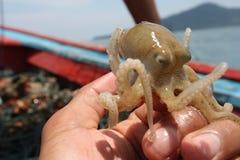 Кальмар в руках рыболова стоковое фото