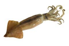 кальмар calamari Стоковые Фото
