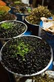 Камбоджийский продовольственный рынок улицы ночи с насекомыми Стоковые Фотографии RF