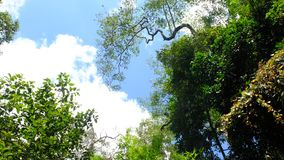 Камбоджи Mondulkiri провинции интерес очень для touris Стоковые Изображения