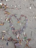 Каменистое сердце положенное на пляж стоковые изображения