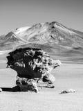 Каменная горная порода дерева Стоковые Изображения RF